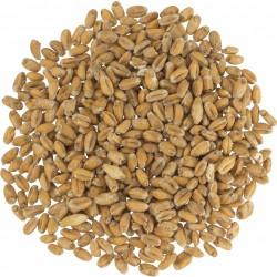 German Pale Wheat Malt - Weyermann Malting