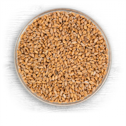 Briess Red Wheat Raw