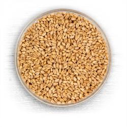Briess White Wheat Raw