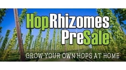 Grow Your Own Hops At Home!